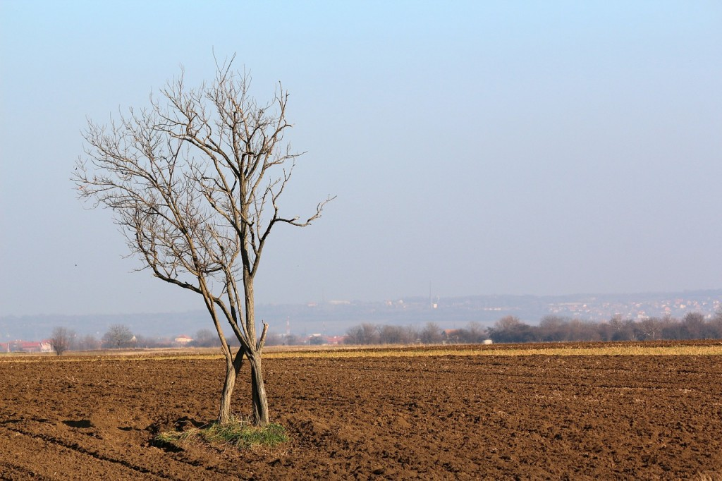 tree-1002167_1280
